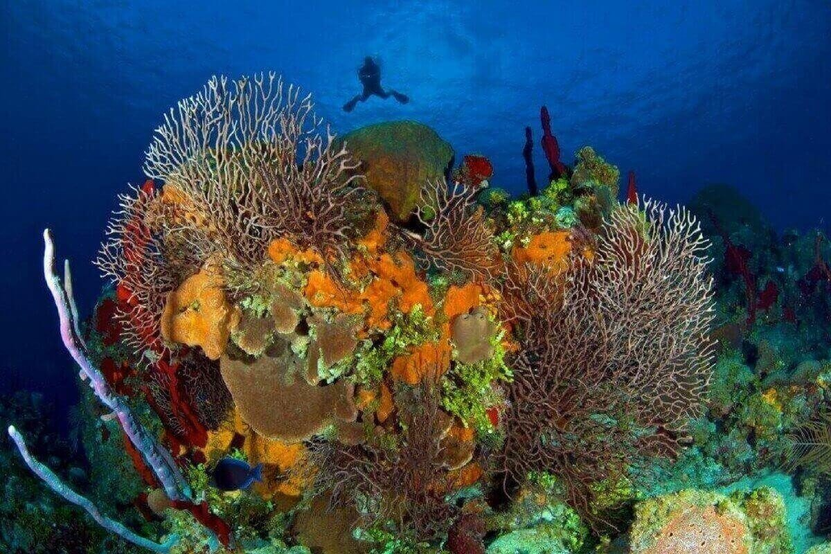 Scuba Diving sites in Seven Mile Beach, Cayman Islands