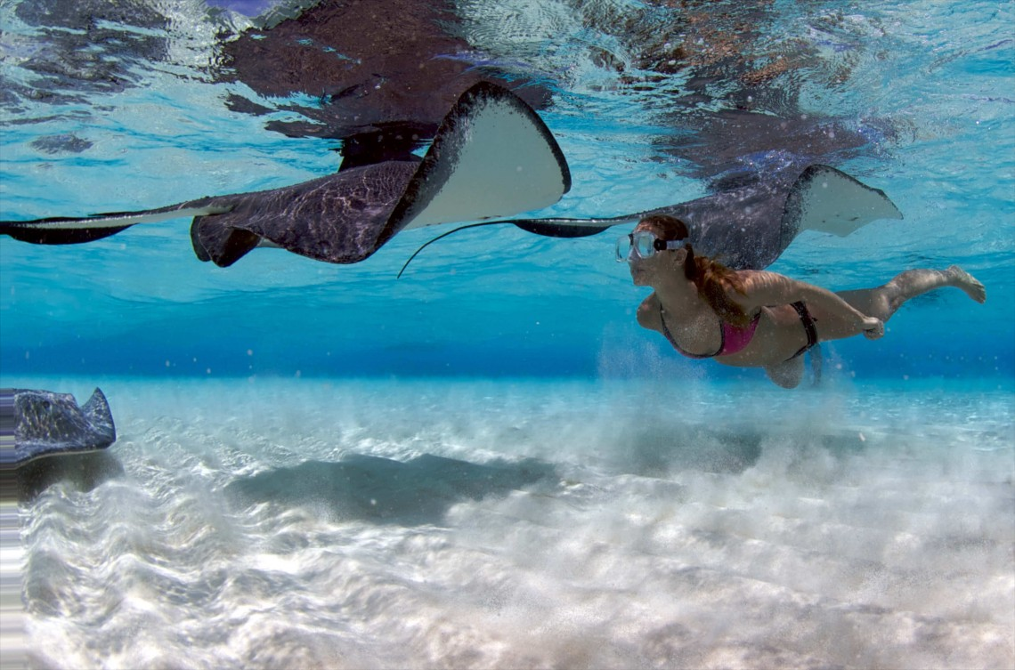 Stingray City, Cayman's #1 Tourism Attraction, Enjoys Full Protection