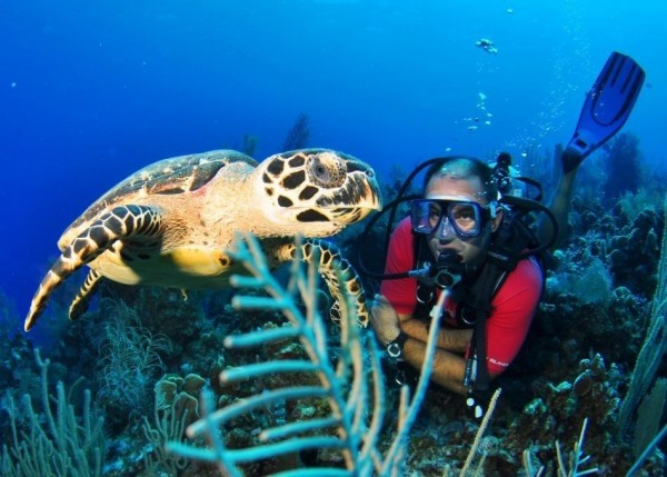 Diving Cayman's Walls & Wrecks