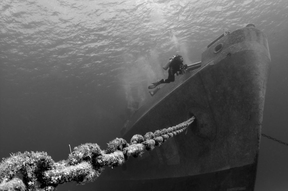 1337023616Diving---B&W-Kittiwake---photographer-Amanda-Nicholls